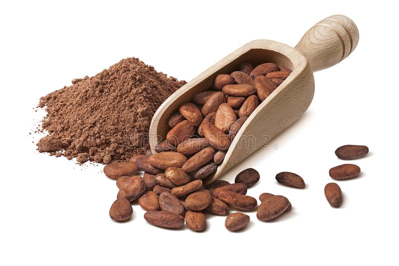 Raw cocoa beans in wooden scoop and powder isolated on white background. Package design element with clipping path royalty free stock photo