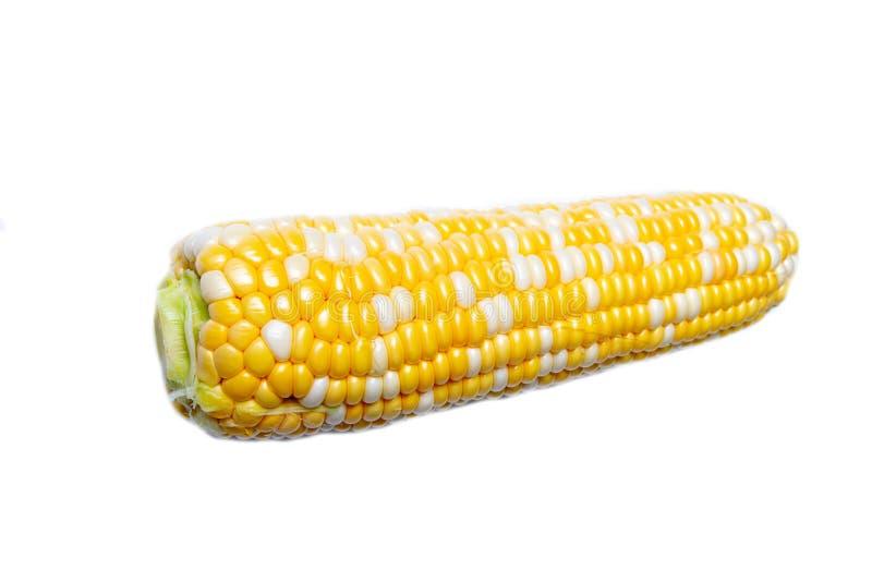 Raw corn isolated on white. Background stock photos