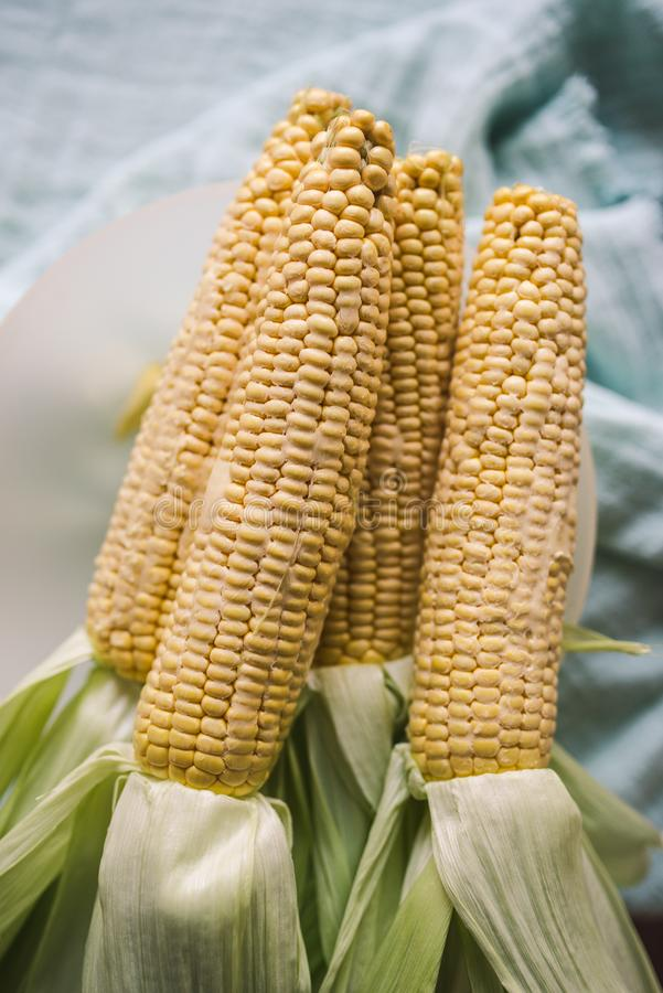 Raw corn prepared for baking. Whole raw corn prepared for baking, the corns are rubbed with butter and salt royalty free stock images