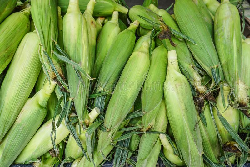 Raw corns for sale at rural market. In Cameron Highlands, Malaysia stock images