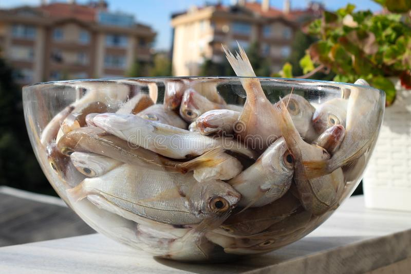 Raw dead fishes on plate. Raw many dead bluefish deep in a glass plate in outdoor stock photos