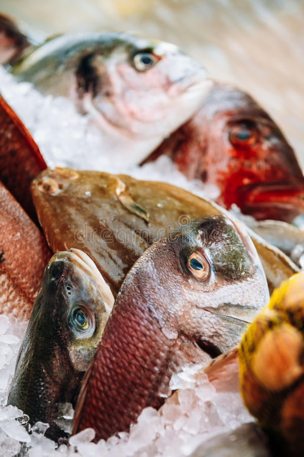 Raw delicious fresh fish on ice on market store shop. Dorado fis. Close up of delicious fresh fish on ice on market store shop. Dorado fish on ice - healthy food royalty free stock images
