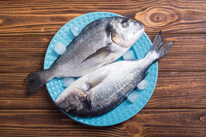 Raw dorado fish in plate with ice. Sea food royalty free stock images