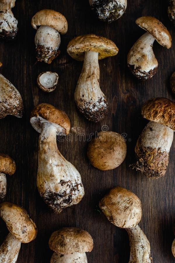Raw edible penny bun porcini mushrooms on rustic dark wooden background royalty free stock photos