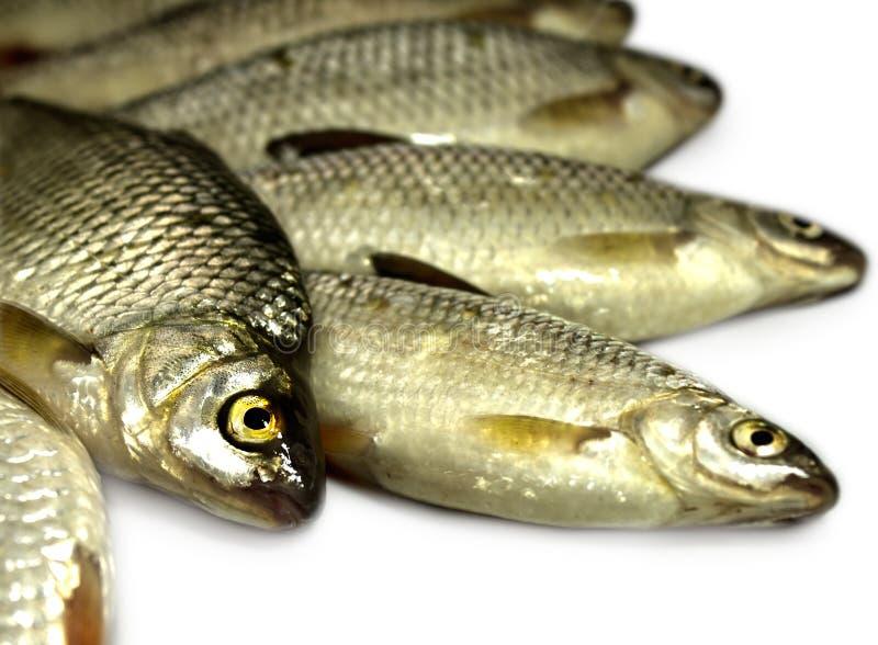 Download Raw Fish Stock Photos - Image: 24457113