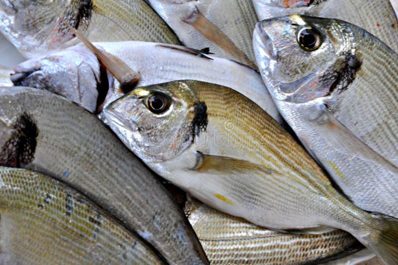 Raw fish. Beautiful raw fish close up stock images