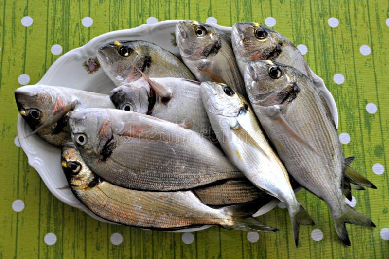 Raw fish. Beautiful raw fish on plate stock image