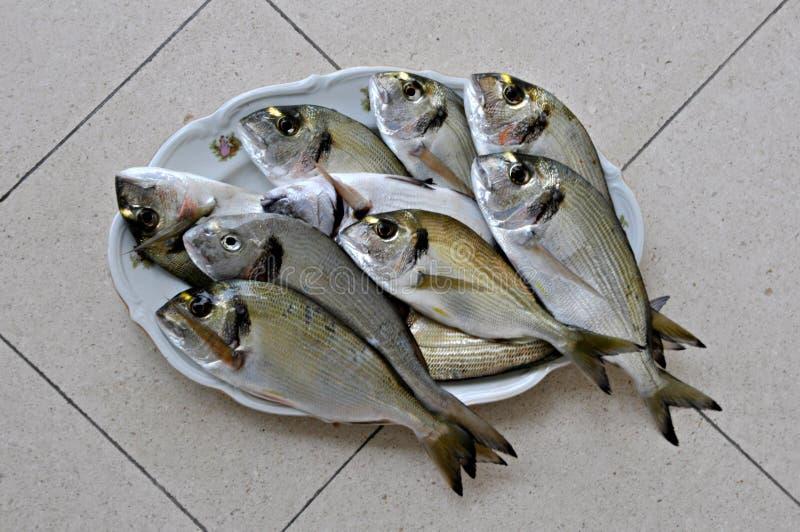 Raw fish. Beautiful raw fish on the plate royalty free stock photo