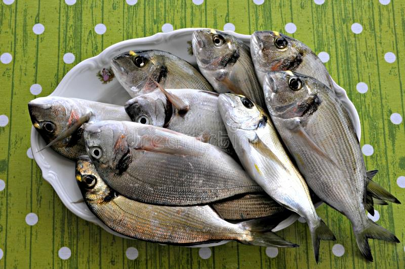Raw fish. Beautiful raw fish on the plate stock images