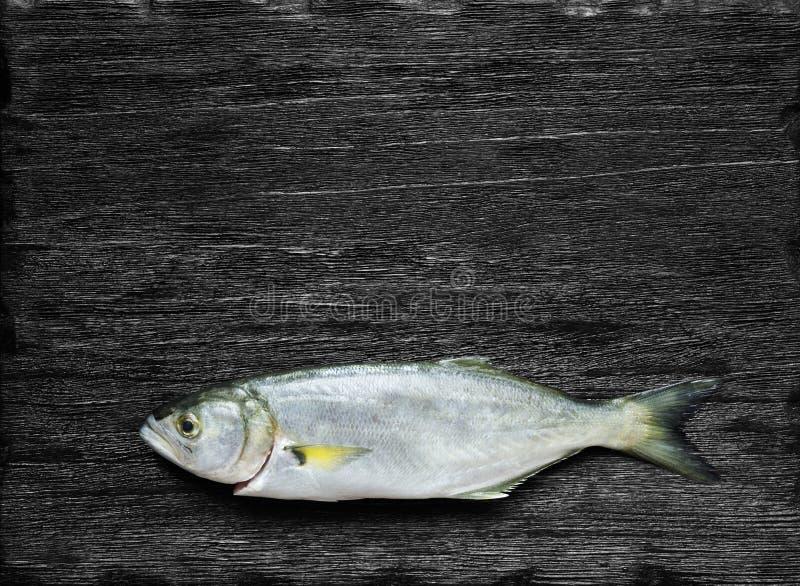 Raw fish (bluefish). Over black background royalty free stock photo