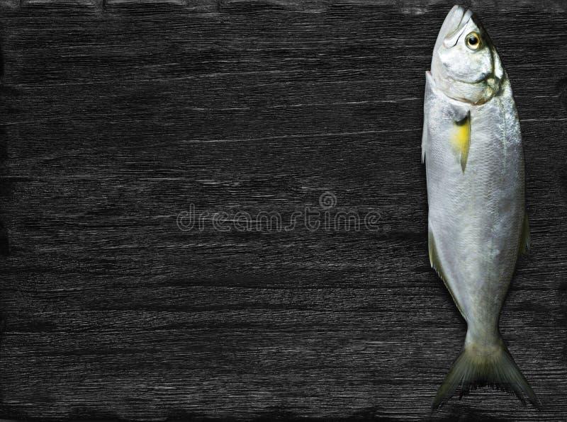Raw fish (bluefish). Over black background royalty free stock image