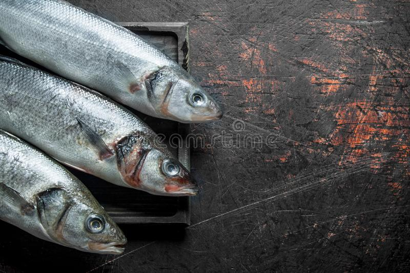 Raw fish on cutting Board. On dark rustic background stock photography
