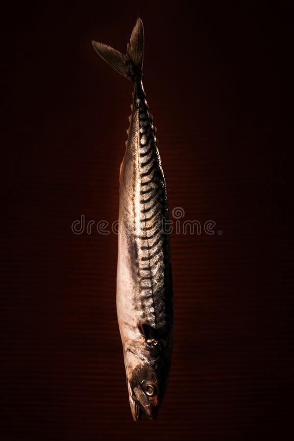 Download Raw Fish Hanging Down On A Dark Background Stock Photo - Image: 27402502