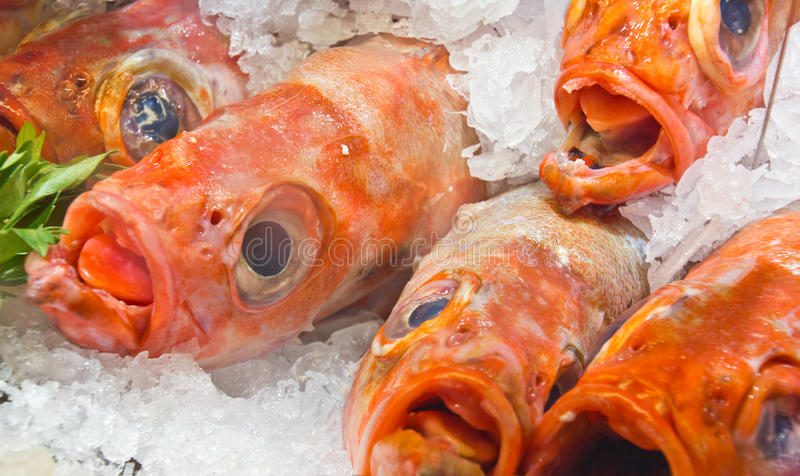 Download Raw fish in ice stock image. Image of seafood, delicacy - 20526891