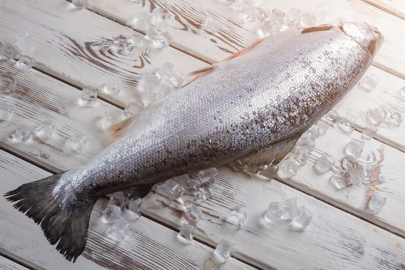 Raw fish on ice cubes. Fish on white wooden surface. Salmon was bought in supermarket. Big and expensive fish stock photos