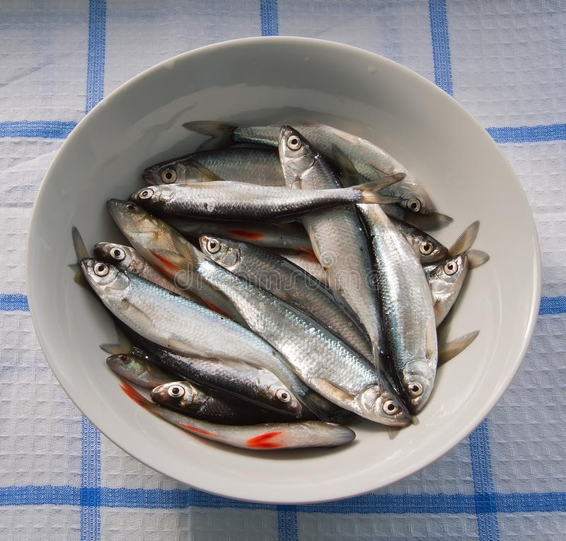 Free Raw Fish In The Plate Royalty Free Stock Photo - 19613425