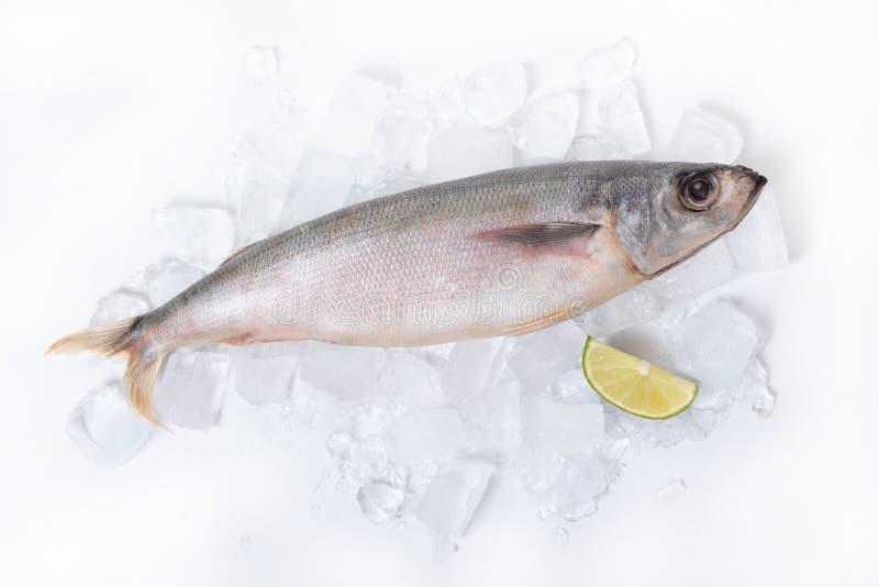 Raw fish lying on ice. With a slice of lemon stock image