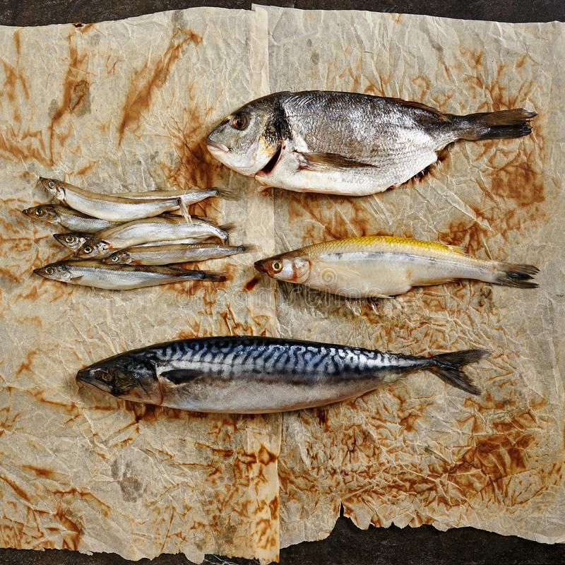 Raw Fish Mix. With Vegetables on Rustic Paper Background Top View. Fresh Whole Capelin or Smelt, Mackerel, Dorado and Sardinella with Spices and Herbs Flat Lay royalty free stock photos