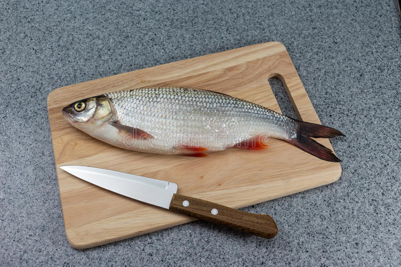 Raw fish, not cooked. White fish on a cutting Board and a knife. stock images
