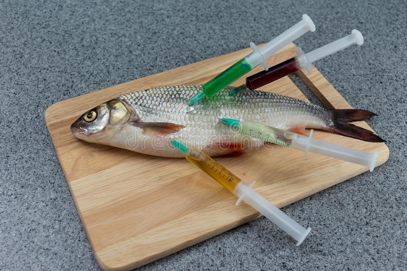 Raw fish, not cooked. White fish on a cutting Board riddled with stock photo