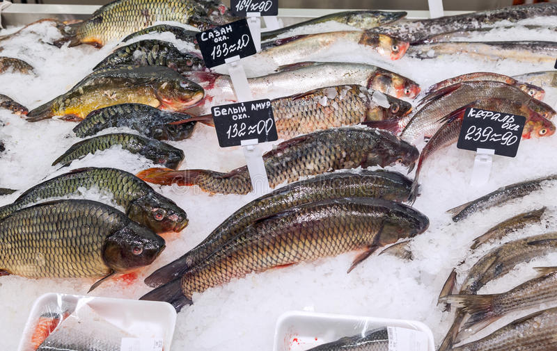 Raw fish ready for sale at the supermarket royalty free stock image