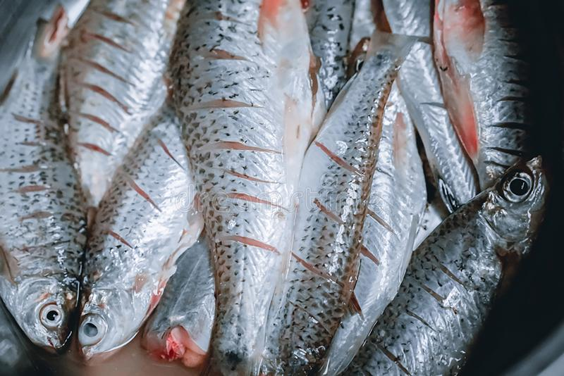 Raw fish ready to cook royalty free stock photos