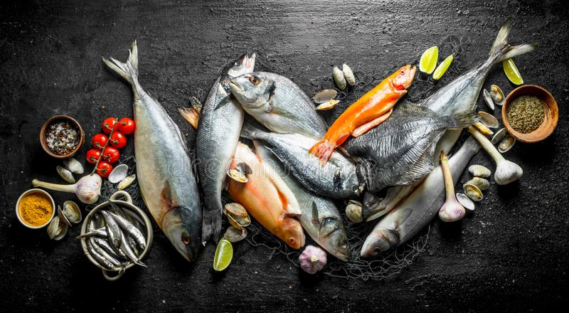 Raw fish with spices, tomatoes and oysters. On black rustic background royalty free stock photo