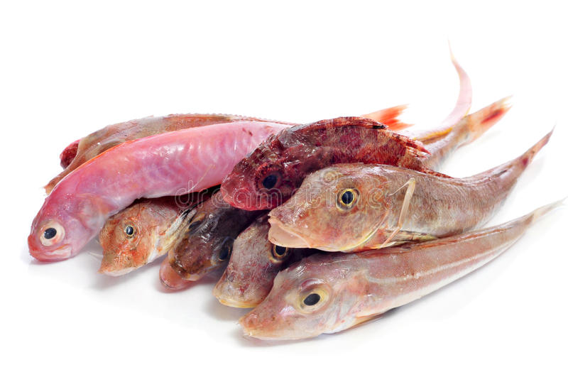 Raw fishes royalty free stock photography