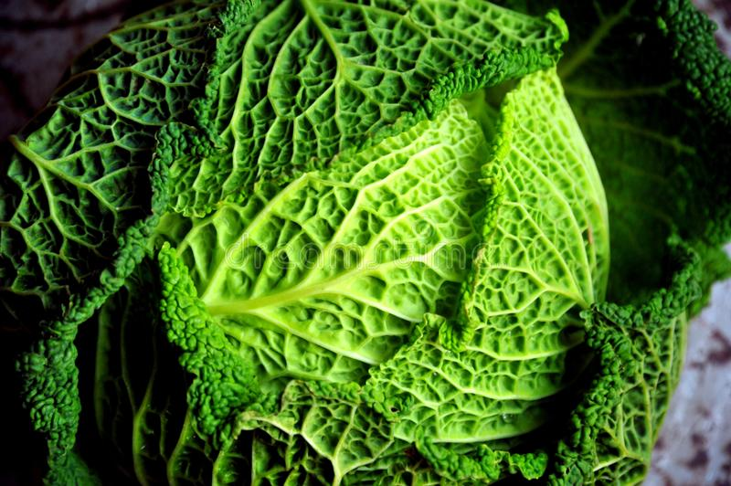 Raw food diet concept with fresh, green cabbage royalty free stock photography