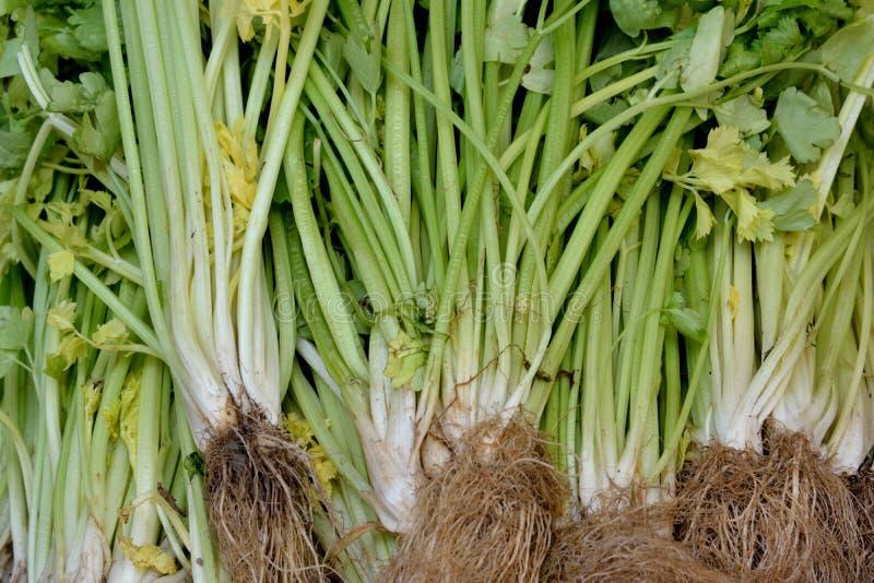 Fresh Celery On Sale Stock Photography