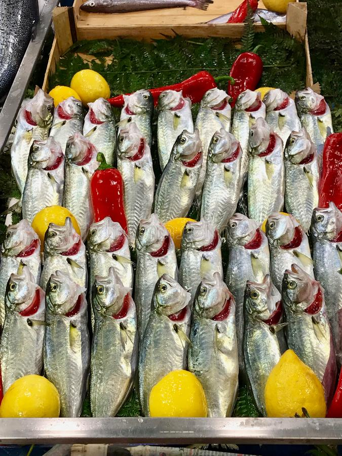 Raw Fresh Fish Bonito bluefish, lufer for sale in Market Bazaar in Istanbul. Organic Food royalty free stock photography