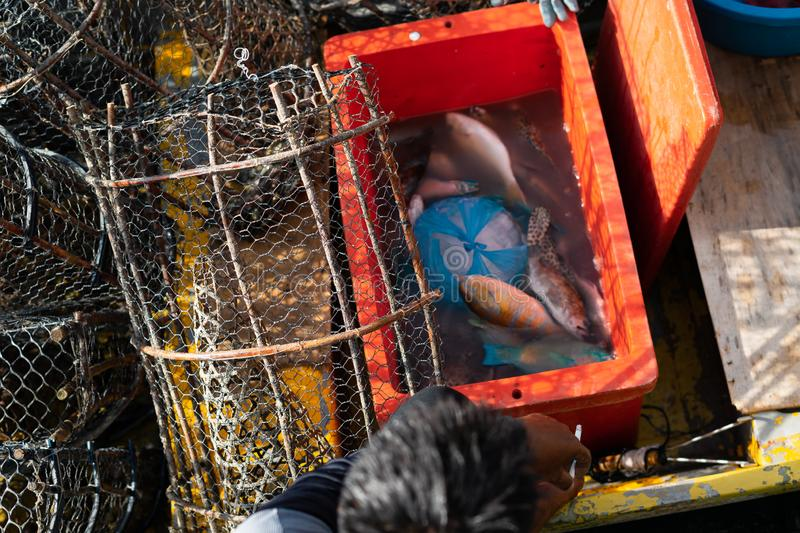 Raw and fresh fish in the fisherman`s boat to be sold to the customers in Semporna, Sabah royalty free stock photo