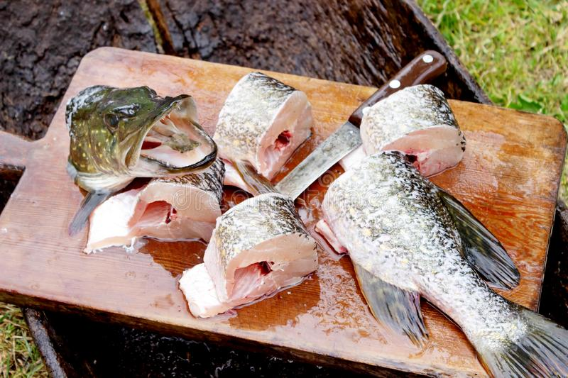 Raw fresh fish is a pike, caught and butchered on the nature of the Catch of the fisherman. Raw fresh fish is a pike, caught and butchered on the nature, lay royalty free stock photography