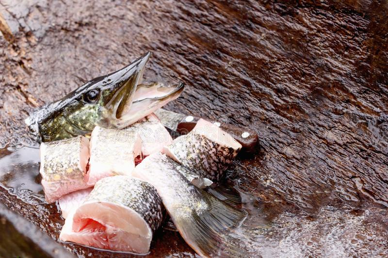 Raw fresh fish is a pike, caught and butchered on the nature of the Catch of the fisherman. Raw fresh fish is a pike, caught and butchered on the nature, lay stock images