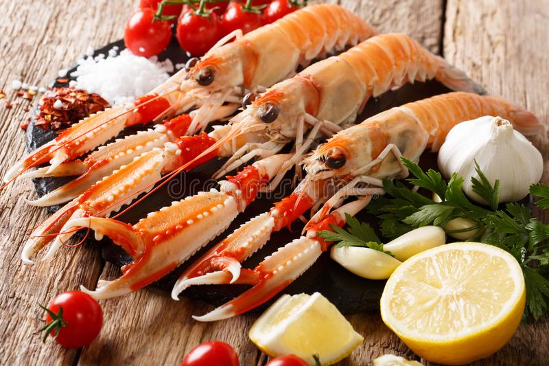 Raw fresh Nephrops norvegicus, Norway lobster, Dublin Bay prawn, langoustine or scampi close-up with ingredients. horizontal royalty free stock photography