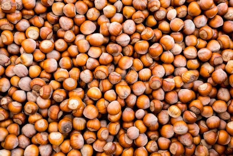 Raw fresh organic hazelnut. In shell nuts. Healthy food on the farmer market. Armenia stock photo