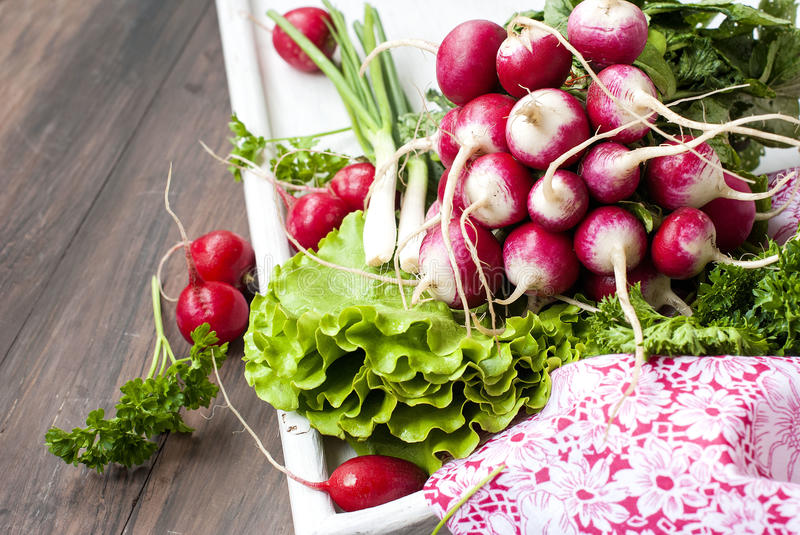 Raw fresh radish. Bunch on white wooden table royalty free stock photography
