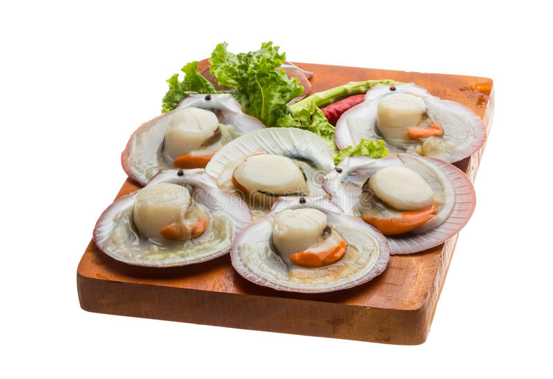 Raw fresh scallop. Ready for cooking royalty free stock photos