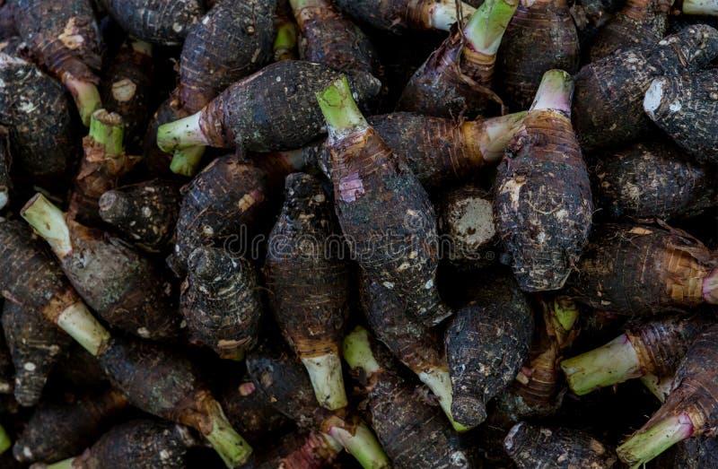 Raw fresh taro pile . Group of stcking raw Taro Yautia Lila, close-up fresh japanese taro in fresh market. Pile of fresh taro root retail sale in supermarket royalty free stock photo