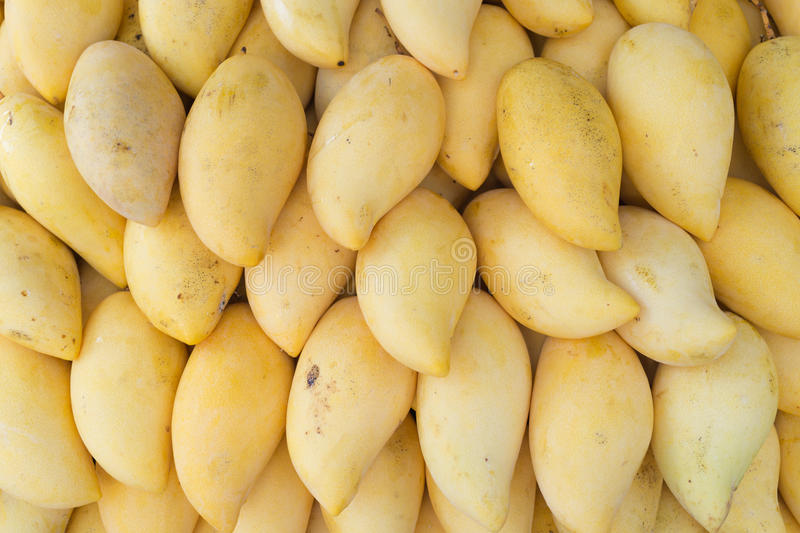 Raw fresh yellow mango thai fruit in summer stock photography