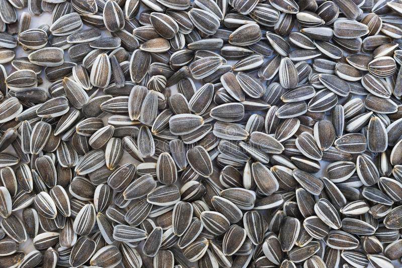 Raw sunflower seeds close up royalty free stock photo