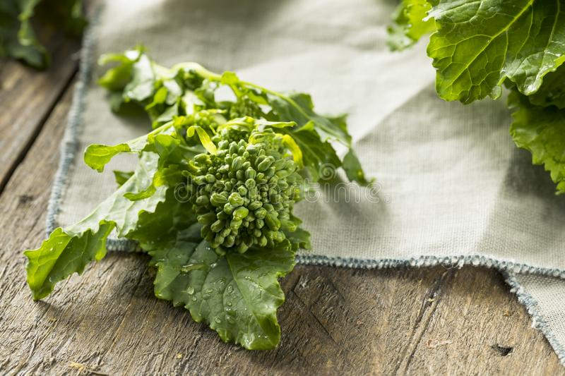 Raw Green Organic Broccoli Rabe stock images