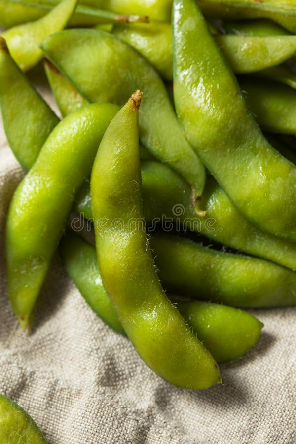 Raw Green Organic Edamame Soy Beans stock image