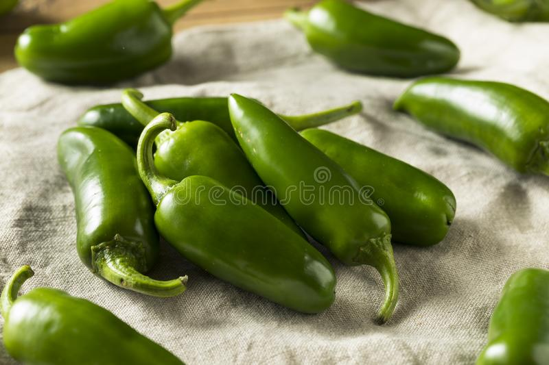 Raw green Organic Jalapeno Peppers. Ready to Cook stock image