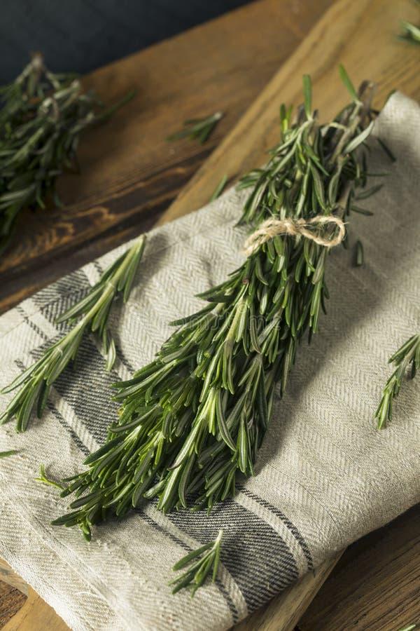 Raw Green Organic Rosemary Herbs. Ready to Use stock photos
