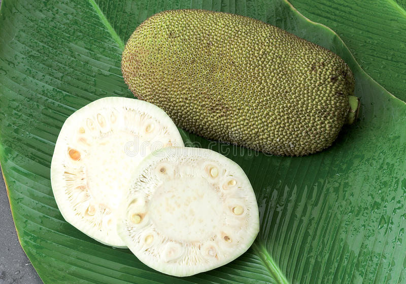 Raw Jack Fruit On Green Leafs Stock Photos