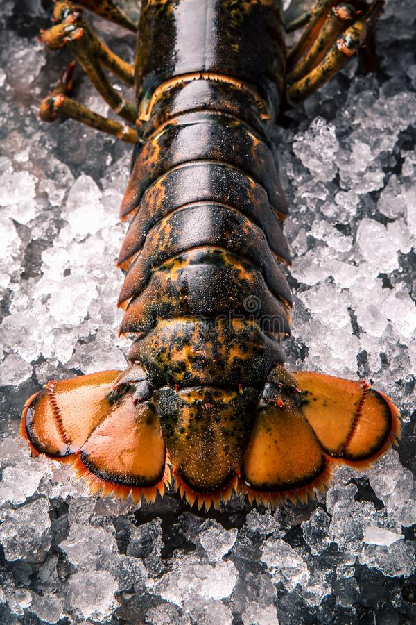 Raw lobster on ice on a black stone table royalty free stock photography