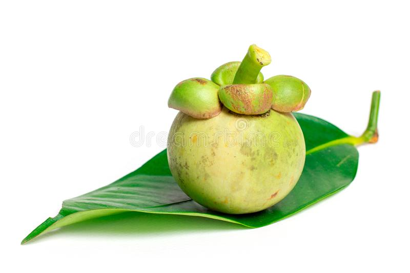 Raw mangosteen with leaf isolated on white background stock photo