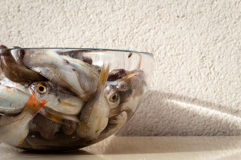 Raw dead fishes on plate. Raw many dead bluefish deep in a glass plate in outdoor royalty free stock photos