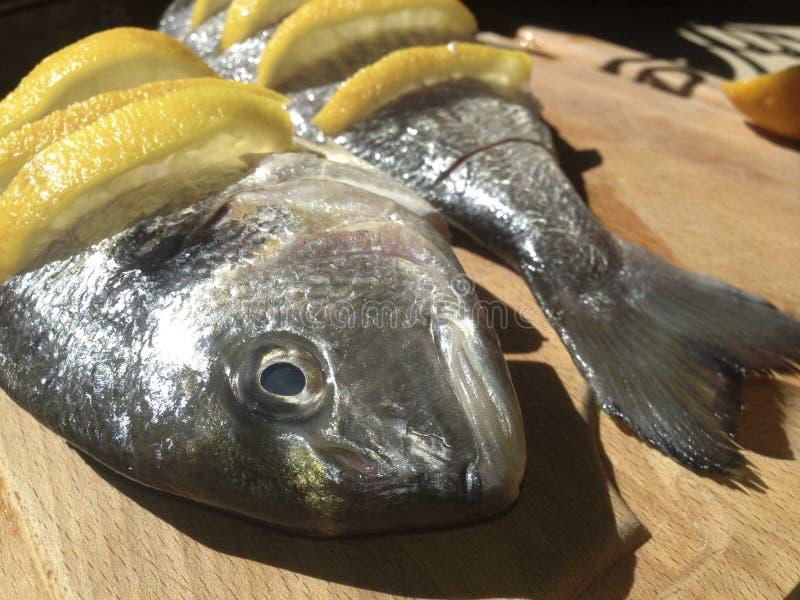 Raw marinated gilt-head bream stock image